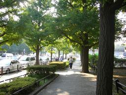 公園前並木道